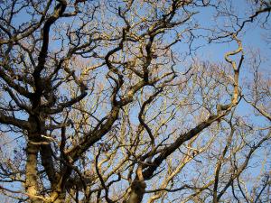 billede af lysende træer