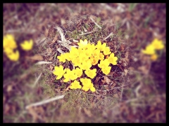foto - forår i haven